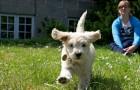 Hundeopdragelse